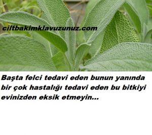 Felç bunun yanında bir çok hastalığı tedavi eden bitki
