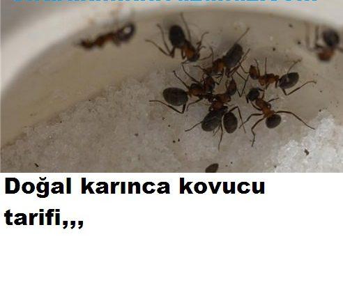 Karınca kovucu