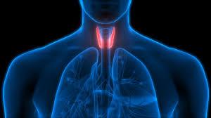 Tiroid hormonunu dengeleyen yiyecek